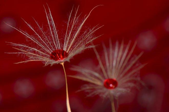 Doğadan kızılötesi kareler