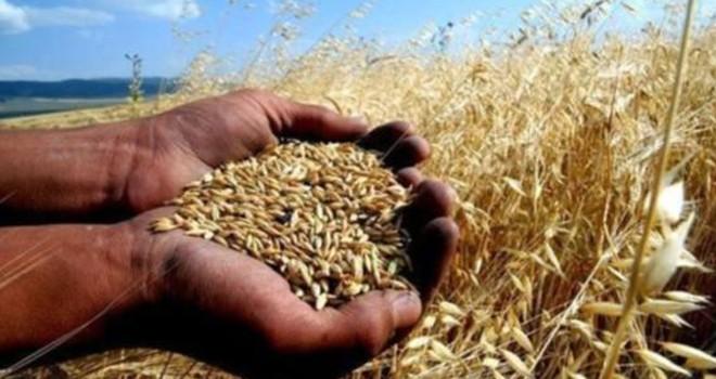 Dünyaya en fazla 26 gün yetecek kadar buğday kaldı