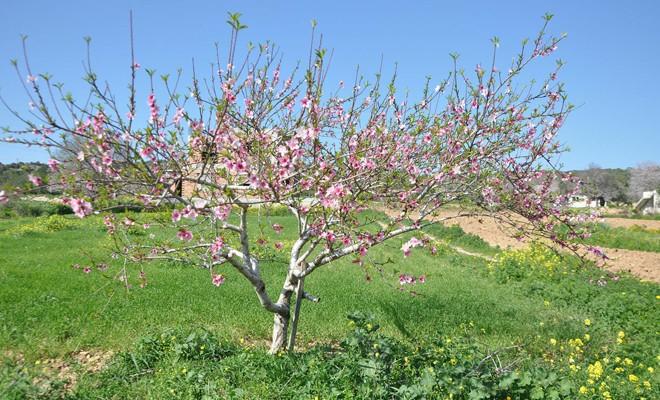 Bahar geldi, Kıbrıs şimdi daha güzel