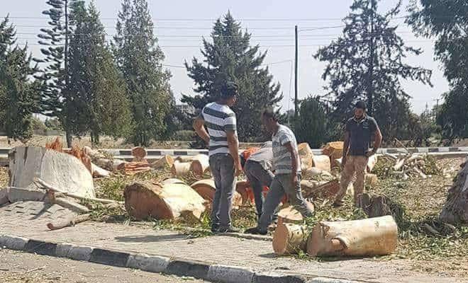 CTP: Güzelyurt'taki yeşil alanlar yok ediliyor