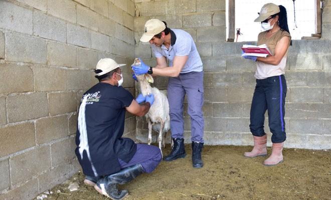 Hayvan sağlığı ve gıda güvenliği Lefkoşa bölgesinde konuşulacak
