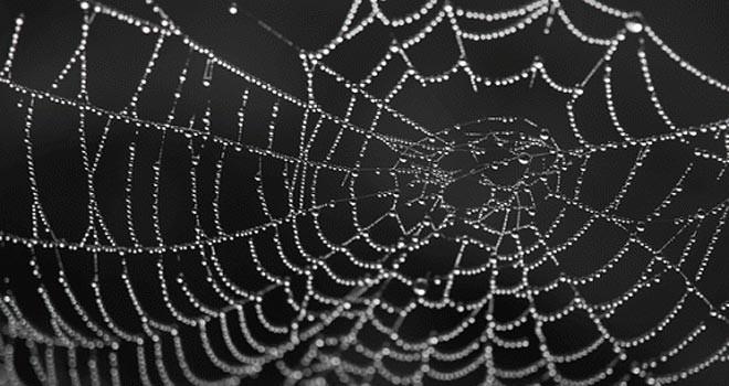 Örümcek ipeğinden hassas işitme cihazı
