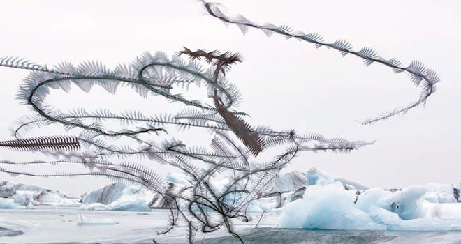 Kuşlar arkalarında iz bıraksalardı gökyüzü nasıl görünürdü?