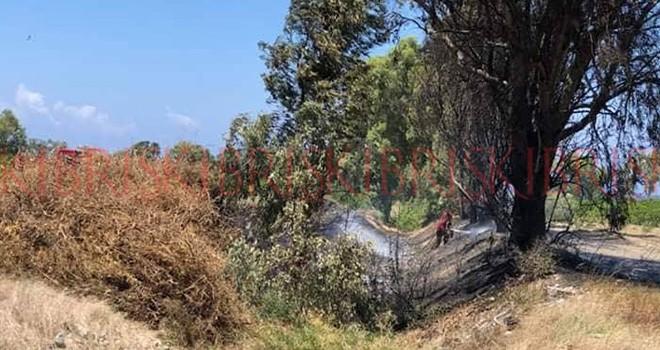 Yeşilyurt'taki yangında 35 ağaç yandı