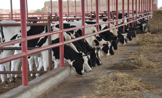 Et fiyatını artıran hayvancılar değil