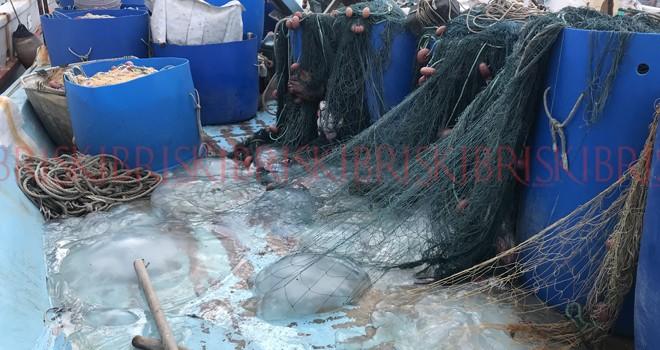 Denizanaları  büyük sorun