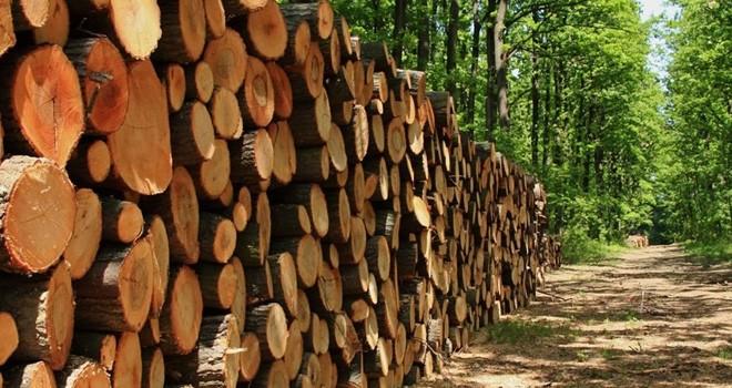 Ormancılar Derneği: Odun satışları denetlenmeli