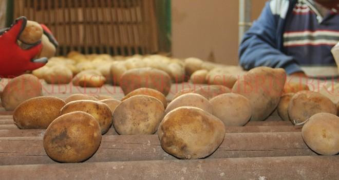 İki günde 25 ton patates satıldı