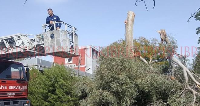 LTL bahçesindeki ağaçlar budandı