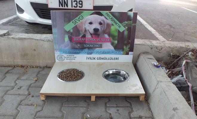 Sokak hayvanlarına yıl boyunca su ve yiyecek sağlanacak