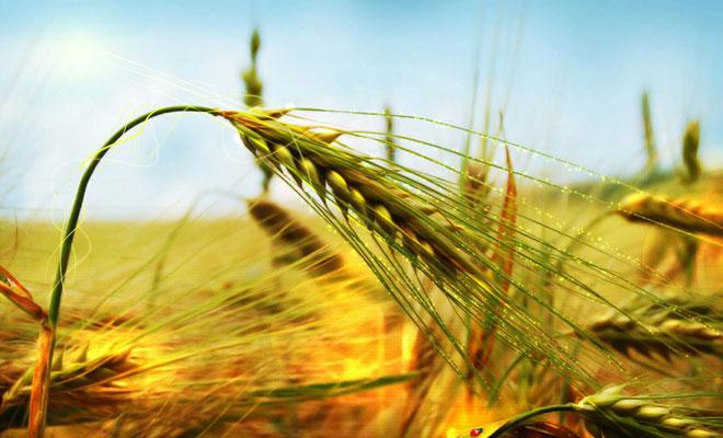 Hedef sürdürülebilir tarım