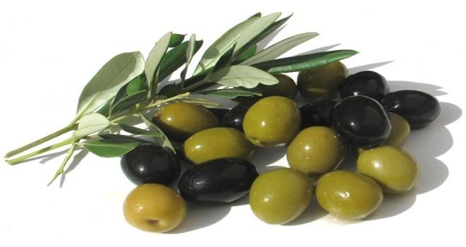 Girne'de yerli zeytin hasadına 22 eylül cumartesi başlanabilecek