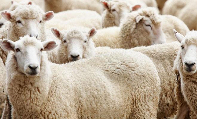Güvenlier: Et ithalatı üreticileri zora sokacak
