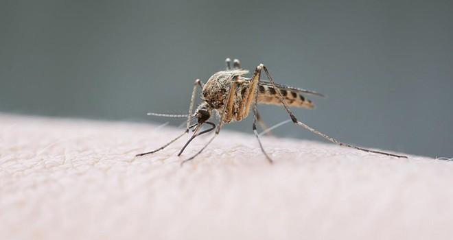 Fransız başkan, sivrisineklerin semte girişini yasakladı