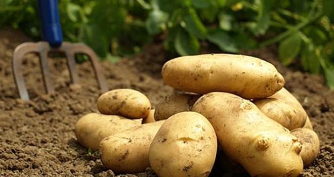 Patates üreticilerinin itirazları yarın mesai bitimine kadar kabul edilecek