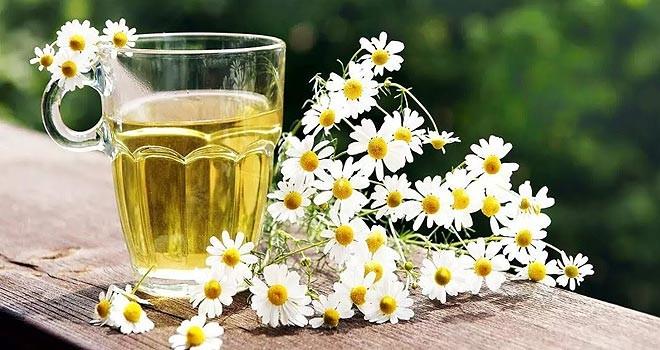 Papatya çayı, stres ve uykusuzluğa iyi geliyor