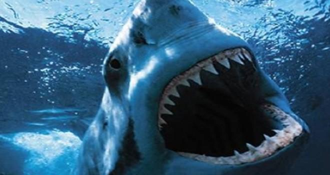 Avustralya'da köpek balığı saldırısında bir çocuk ağır yaralandı