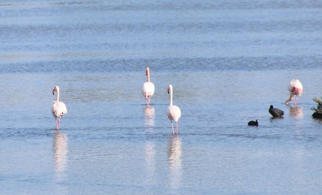 Flamingoların güzelliği