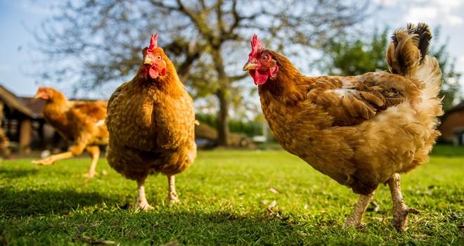 Marketten tavuk çalan adama kesilen cezaya halktan tepki