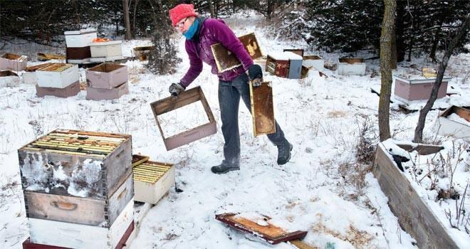 Yarım milyon arıyı öldürülen çocuklar mahkeme karşısında