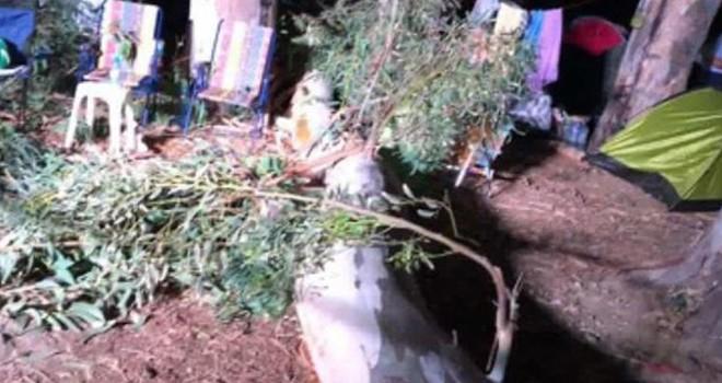 Kampçıların başına ağaç dalı düştü 3 yaralı var