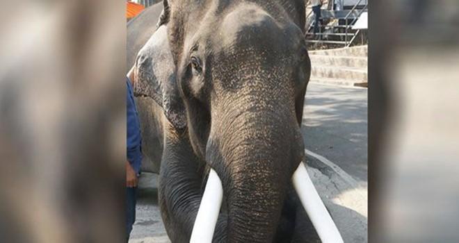 Ünlü fil sahibini öldürdü