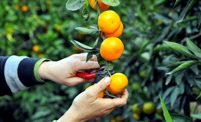 'Cypruvex çalışanların yüzde 90'ını BASS'ta örgütlendi'