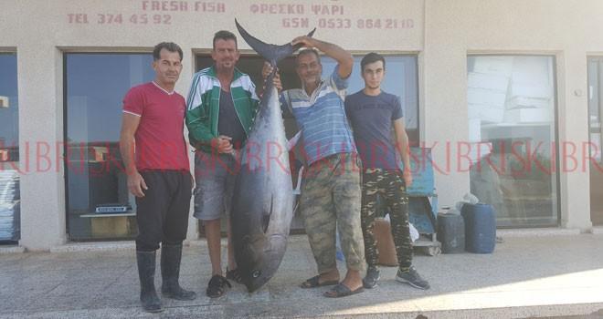Oltayla 100 kiloluk orkinos yakaladı