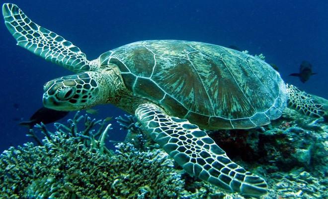 'Deniz kaplumbağaları koruma ve araştırma protokolü' imzalandı