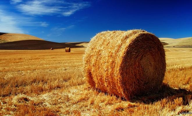 2017 tarımsal destek programı açıklandı