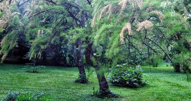 Çim ve mevsimlik bitkiler yerine ağaç ve çalı tercih edin
