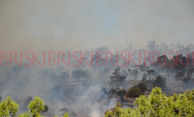 450 hektarlık alan kül oldu!