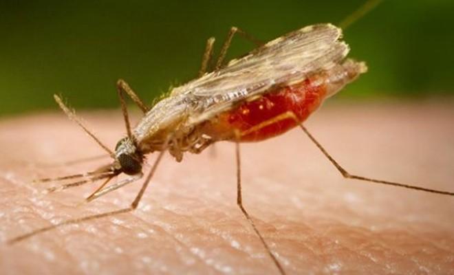 Kenya'da sıtmayla mücadele: 30 ölü