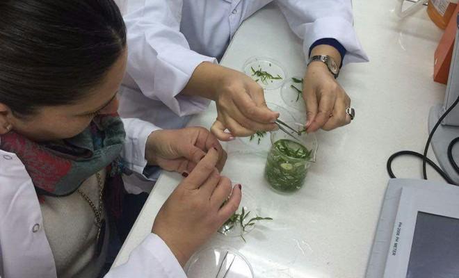 Biyoteknoloji Laboratuvarı'nda çalışmalara başlandı