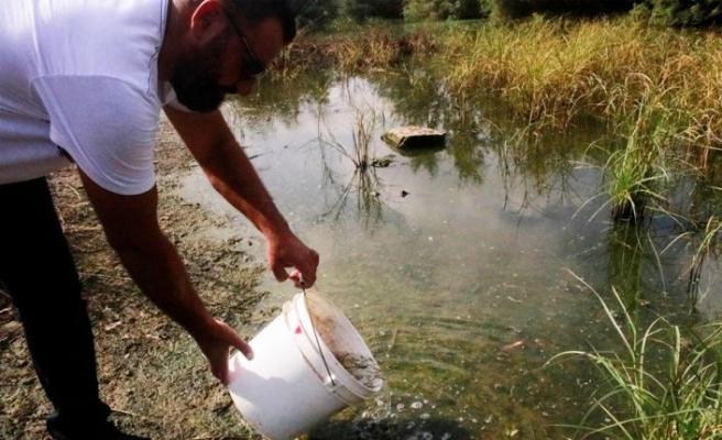 Gazimağusa Belediyesi Çanakkale Göleti'ne sivrisinek larvalarını yiyen balıklar bıraktı