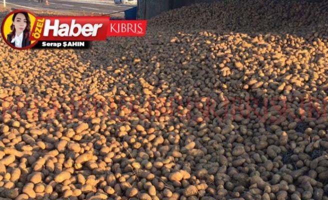 13 ton kaçak patatese el konuldu