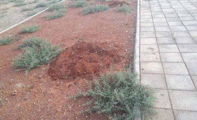 13 yaşındaki çocuğun diktiği ağaç fidanlarını söktüler: Büyümesi için kova kova su taşımıştı!