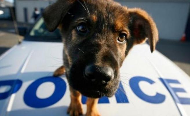 Hayvanlar için polis birimi kuruluyor