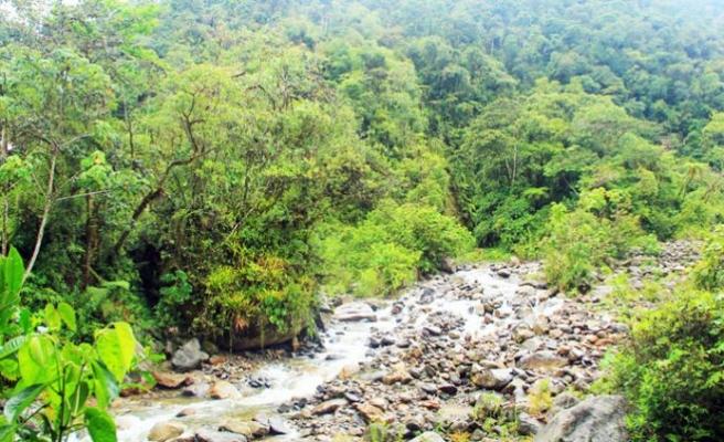 Yağmur ormanlarında kaybolmak