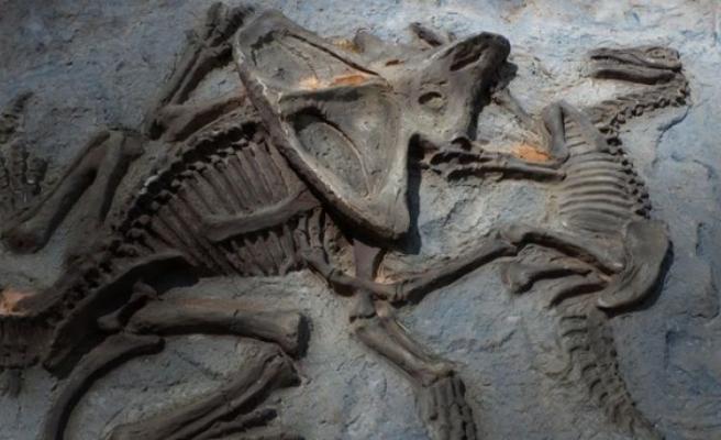Dinozorda kanser tespit edildi