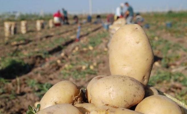 Patates ithaline sınırlı izin