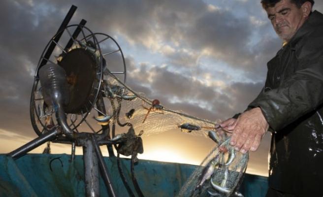 Kaplumbağaları Koruma Cemiyeti, halka daha çok balık tüketmeleri çağrısında bulundu