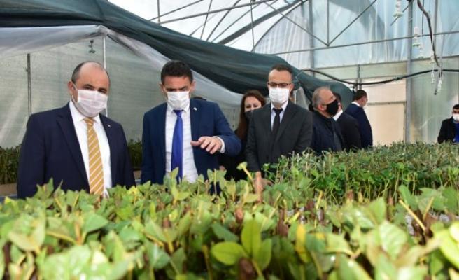 Tarımsal Araştırma Enstitüsü'nün fidan köklendirme kapasitesi 300 bine çıkarıldı