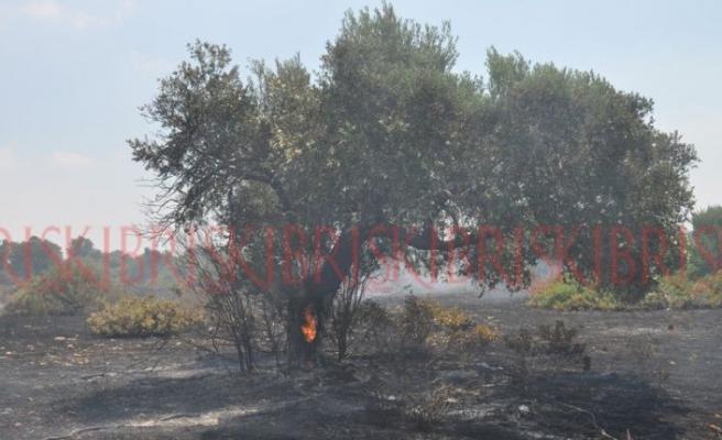 Ağaçlar için için yandı