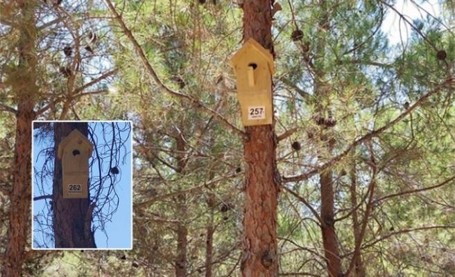 Kıbrıs Medya Grubu, Lefkoşa Lions ve Alsancak Belediyesi elele doğayı korumaya devam ediyor