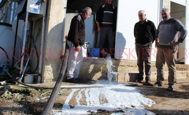 Aflotoksinli 3 ton süt döküldü