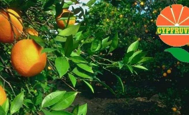 Valensiya portakala ilave ödeme yapılacak