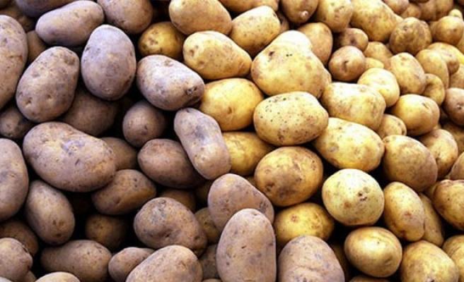 Sağlık sertifikası ile ithal edilen patateslerde mantari hastalık bulundu