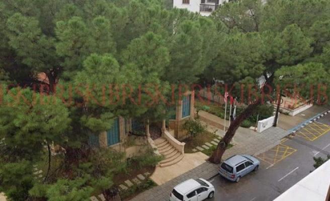 Lefkoşa'daki anıt çam ağaçlarının kesimi engellendi