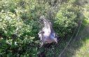 Çayırova'da yine ağ ile pulya avı